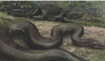 远古世界上最大的蛇 泰坦蟒平均体长达12米